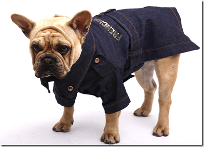 denim dress for dogs