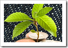 green denim copy_thumb[6]