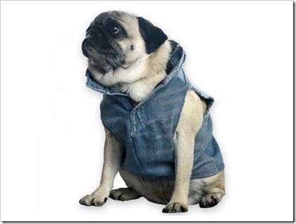Recycled Denim Dog vest