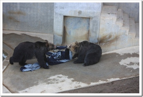 zoo jeans by bear
