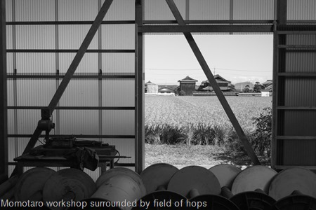 Momotaro workshop surrounded by field of hops
