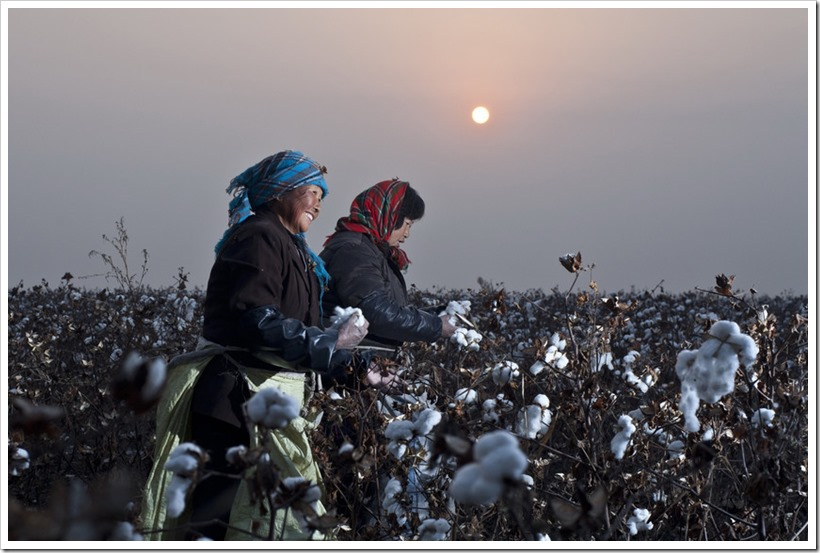 Top Ten Companies Under Sustainable Cotton Ranking 2017  | Denimsandjeans.com