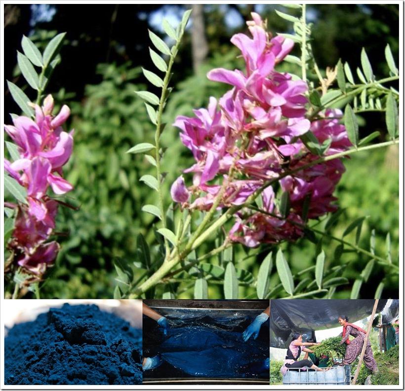 Bio Indigo Launch By AMA Herbal India   Denimsandjeans
