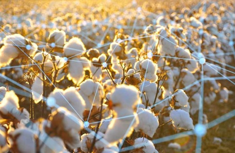 Bext360–Blockchain Technology To Trace Organic Cotton | Denimsandjeans